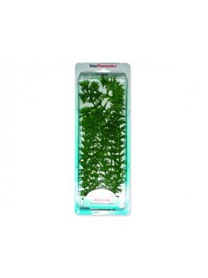 Rostlina TETRA Ambulia Plus 30 cm