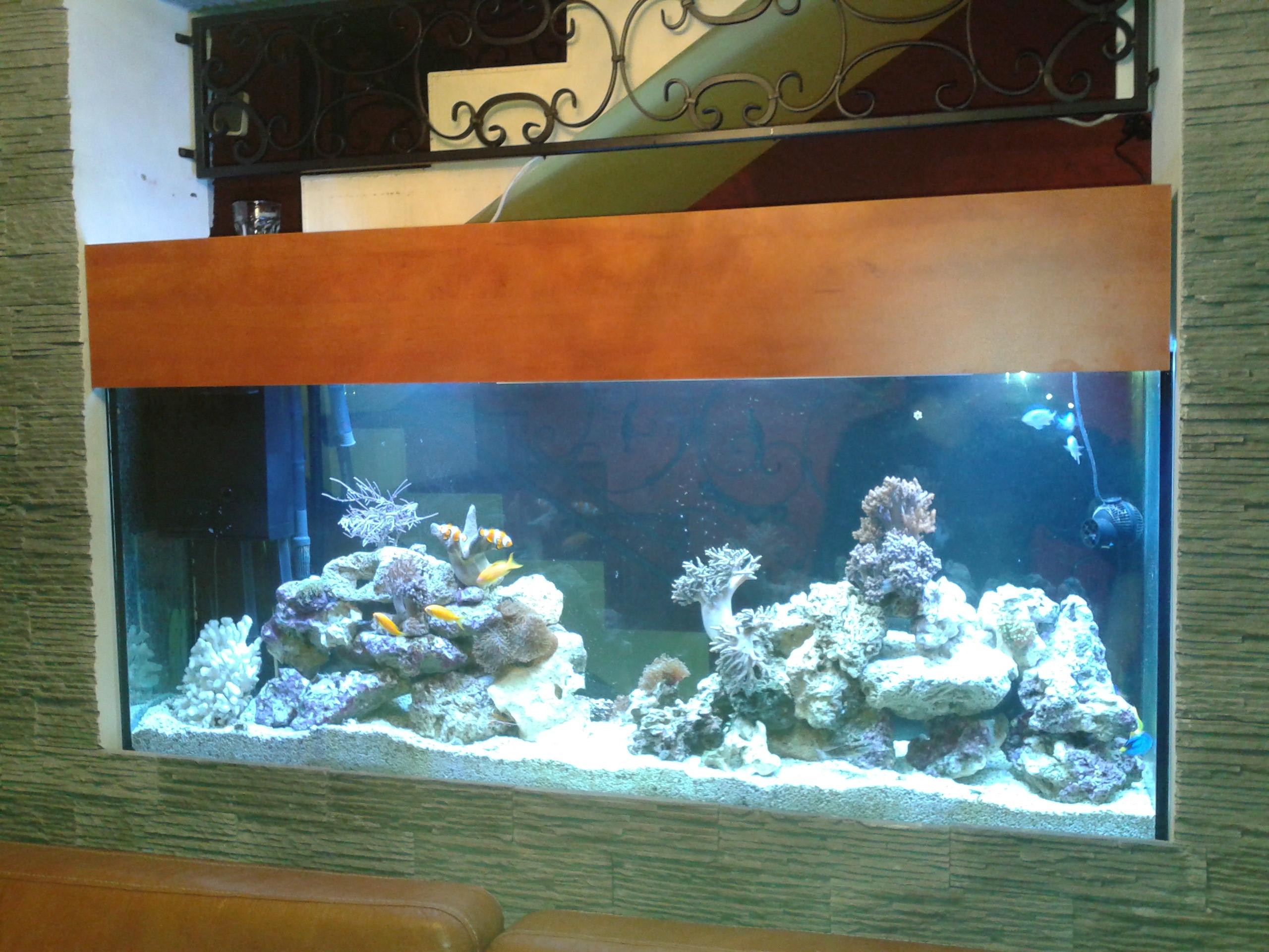 Předělávka sladkovodního akvária na mořské.